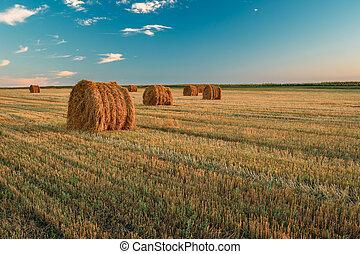 durante, ocaso, heno, paisaje, cosecha, verano, soleado, balas, pradera, evening., rural, campo, tarde