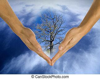ecología, manos, responsabilidad, empresa / negocio