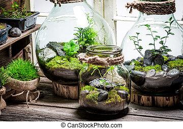 ecosistema, tarro, sí mismo, hermoso, bosque, vivo