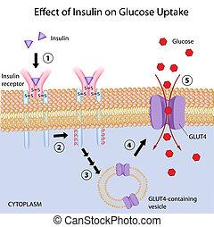 Efecto de Insulina en glucosa