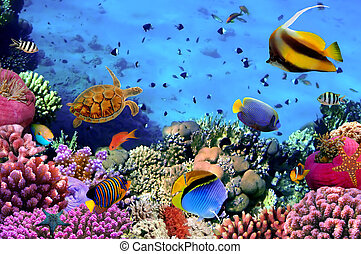 egipto, foto, coral, colonia, arrecife