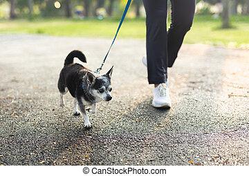 ejercicio, perro caminante, chihuahua, parque, mujer