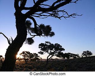 El árbol seco en el cielo azul de fondo.