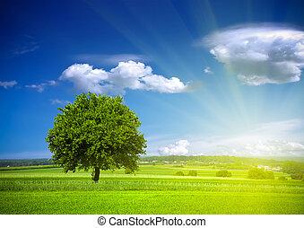 El ambiente de la naturaleza verde