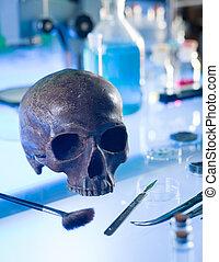 El antiguo cráneo humano