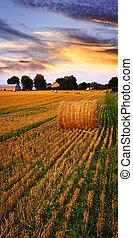 El atardecer dorado sobre el campo