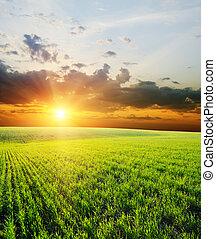 El atardecer sobre el campo verde