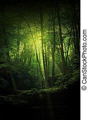 El bosque de fantasía