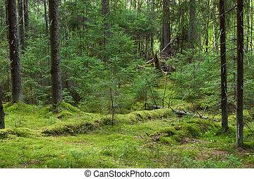 El bosque misterioso