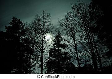 El bosque oscuro de la luna