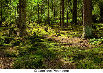 El bosque primitivo-HDR