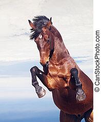 El caballo de la bahía se levanta en el fondo del cielo