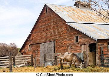 El caballo solitario pasta en corral de granjas de granja