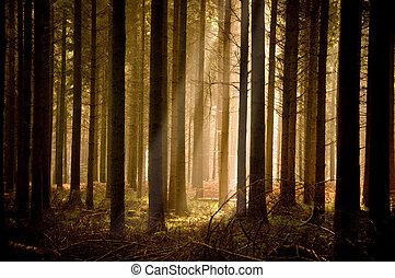 El calor del sol brilla a través de un bosque