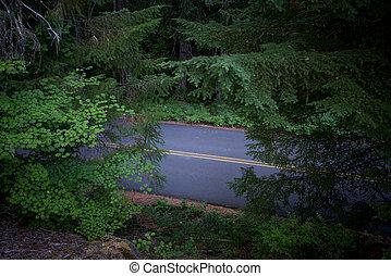 El camino atraviesa el bosque de Oregon
