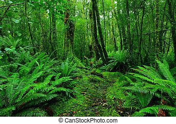 El camino de la selva tropical