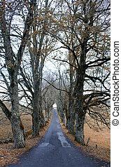 El camino de los árboles