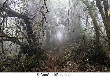 El camino del horror en el bosque