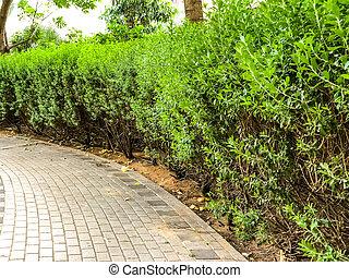 El camino en el parque está lleno de baldosas de piedra, al lado de arbustos en flor