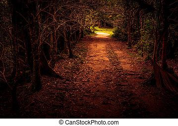 El camino misterioso arroja el bosque