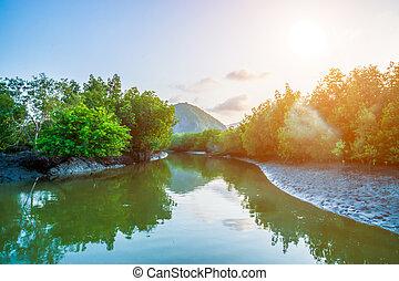 El canal del bosque Mangrove