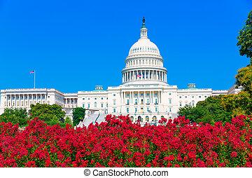 El Capitolio Washington DC flores rosas USA