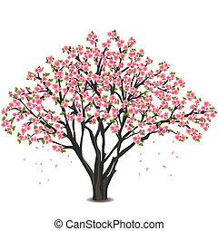 El cerezo japonés florece sobre el blanco