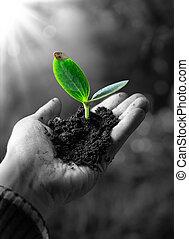 El concepto de agricultura, pequeña planta