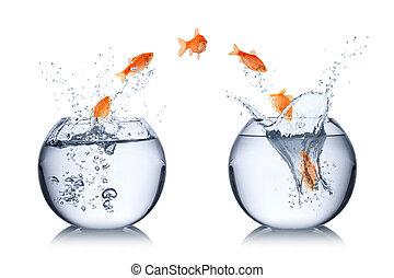 El concepto de cambio de pescado