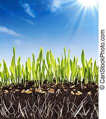 El concepto de crecimiento, fondo, suelo