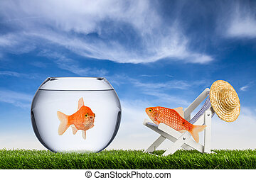 El concepto de libertad de peces