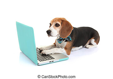 El concepto de perro mascota con computadora portátil