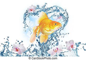 El corazón del agua salpica con burbujas