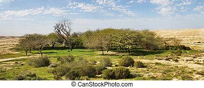 El desierto de Negev en la primavera sobre el fondo del cielo azul