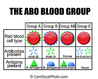 El diagrama del grupo ABO