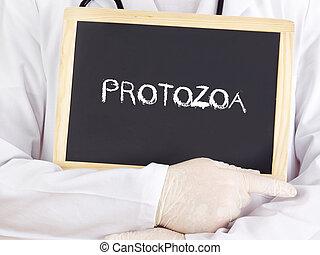 El doctor muestra información: protozoa
