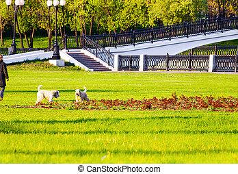 El dueño de un perro en el parque
