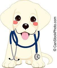 El estetoscopio de los perros