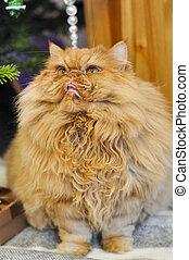 El gato rojo persa está jugando bajo el árbol de Navidad condecorado