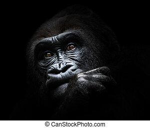 El gorila de las tierras bajas occidentales III