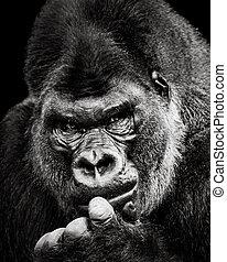 El gorila de las tierras bajas occidentales X