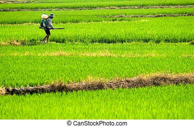 El granjero rocía insecticida en la granja