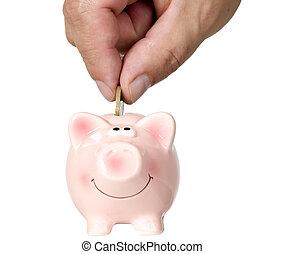 El hombre está poniendo dinero en salvar cerdos