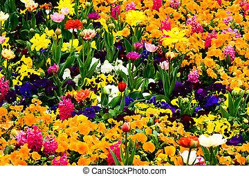 El jardín lleno de flores