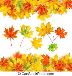 El marco de las hojas de otoño está aislado en blanco