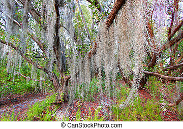 El musgo español siempre va al parque nacional