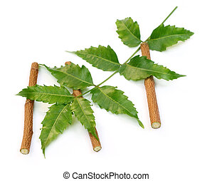 El neem se va con ramitas