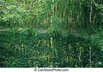 El pantano verde