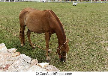 El pastoreo de caballos.
