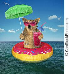 El perro bebe jugo de rosquilla inflable